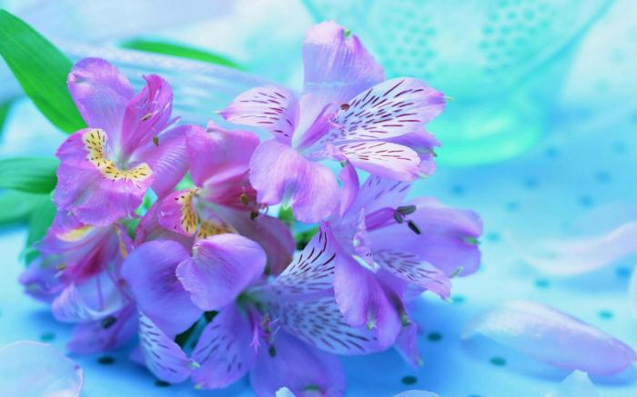 скачать широкоформатные обои на рабочий стол цветы № 294395 бесплатно