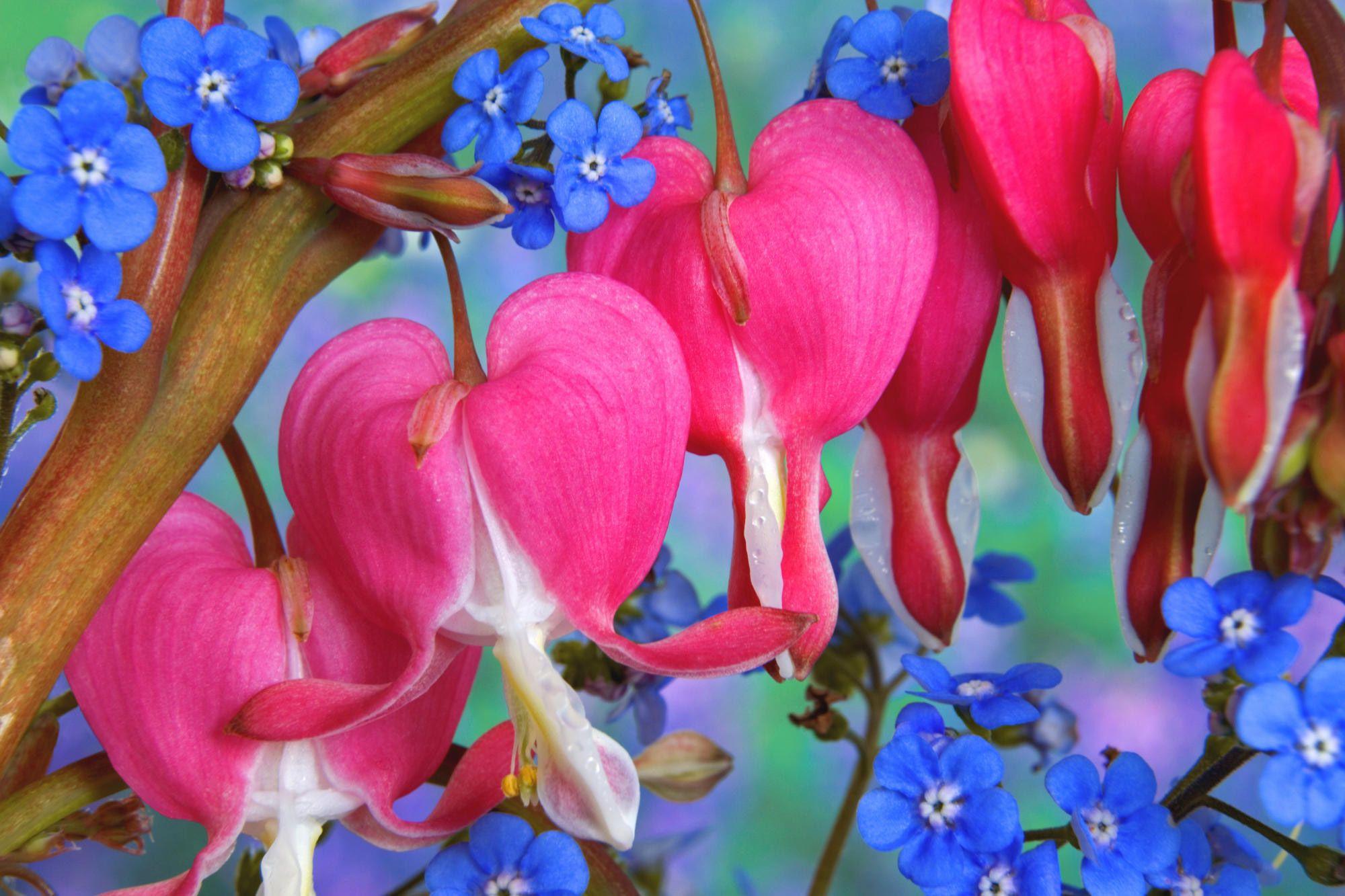 Ромашки в садовом дизайне