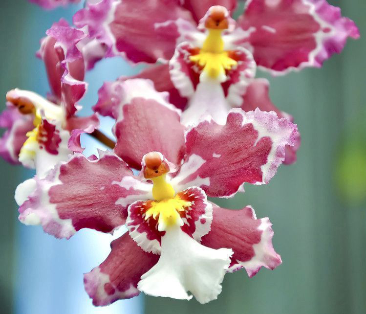 Орхидеи - красивые картинки и фото