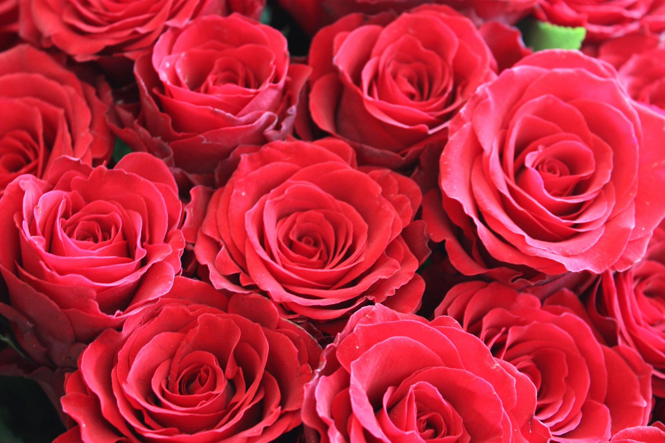 фото букетов цветов из хризантем